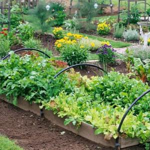 fall veggies for garden